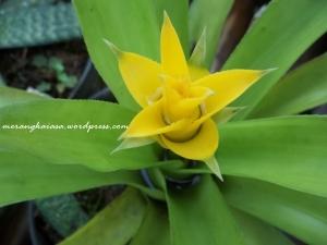 bunga nenas